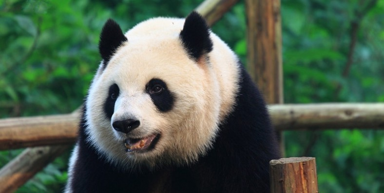 12 Days Shanghai-Beijing-Xian-Chengdu-Shanghai Small Group Tour