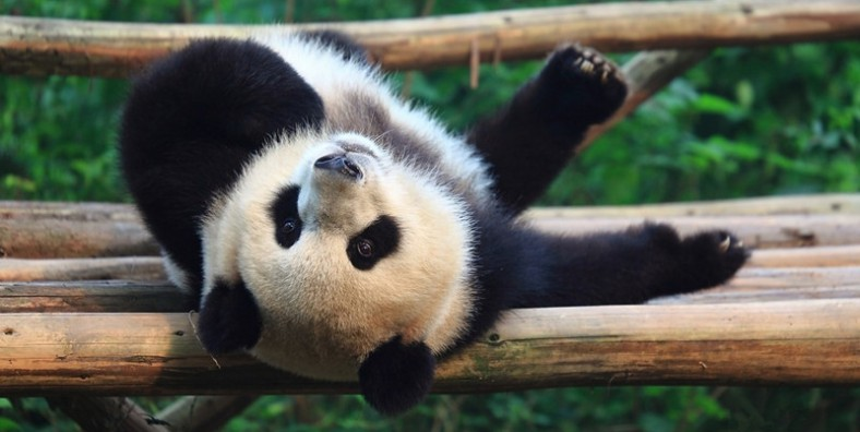 12 Days Best China Tour with Giant Panda Experience
