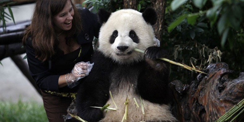 3 Days Chengdu & Bifengxia Panda Volunteer Tour
