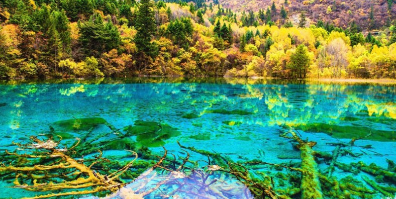 5 Day Chengdu and Jiuzhaigou Highlights Tour