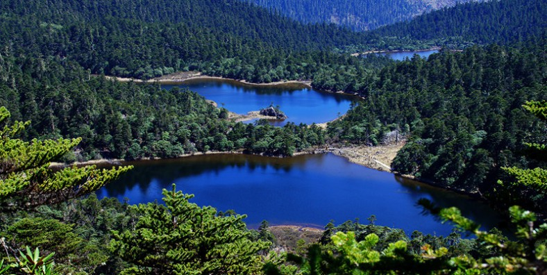 1 Day Laojun Mountain National Park Tour with 99 Dragon Pools and Rhododendron Flowers