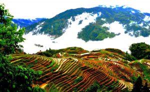 Longsheng Longji Rice Terraces in Guilin