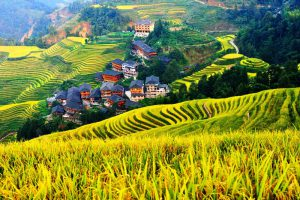 Longsheng Longji Rice Terraces in Guilin