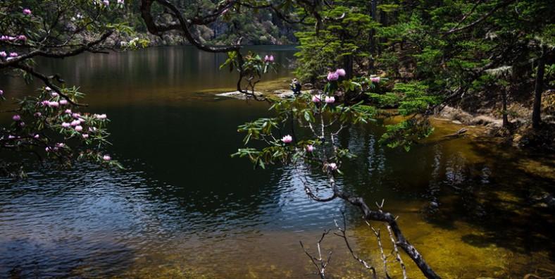 1 Day Shangrila Qianhushan Mountain Rhododendron Flowers Tour