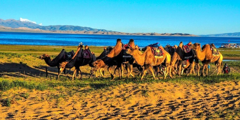 5 Days Qinghai Tour with Qinghai Lake and Tongren Monasteries