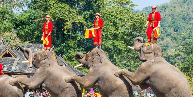 4 Days XishuangBanna Wild Elephant Golf and Sightseeing Tour