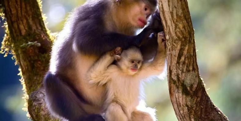 2 Days Tacheng Yunnan Snub-nosed Monkey Tour from Shangri-La