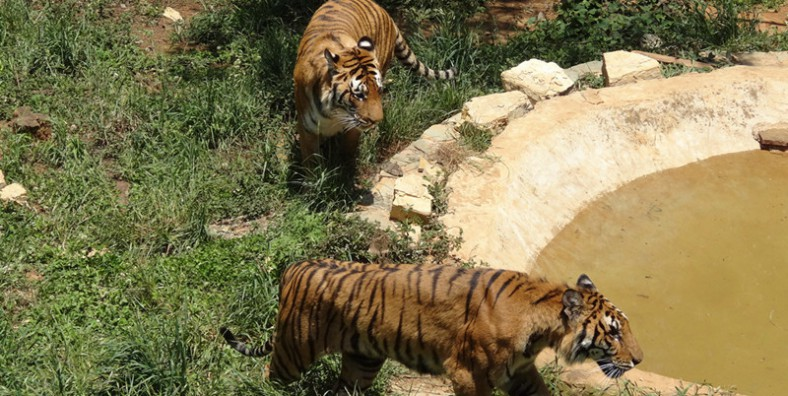 1 Day Kunming Animals Tour to Yunnan Wild Animal Park