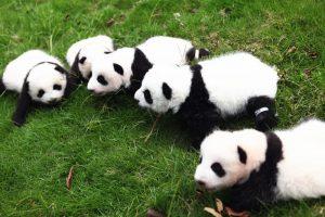 Wolong Panda Reserve in Sichuan