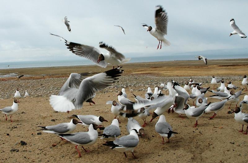 Bird Island in Qinghai Lake