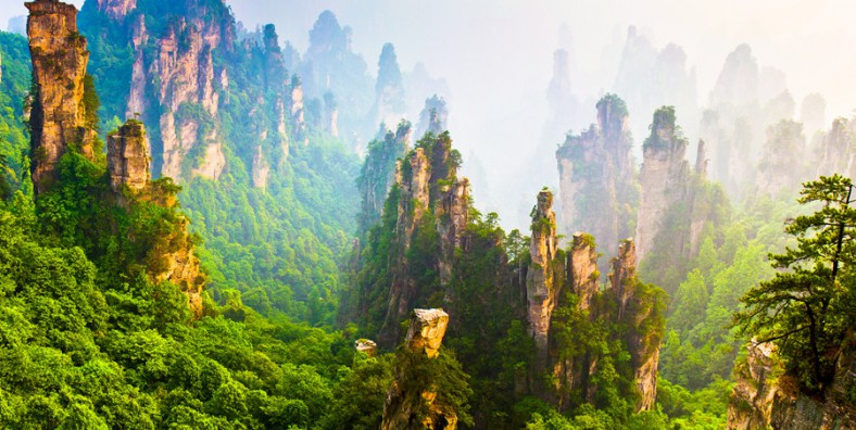 1 Day Zhangjiajie National Forest Park Birding Tour
