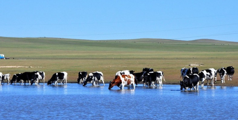 5 Days Hulunbuir Grassland and Folk Culture Tour