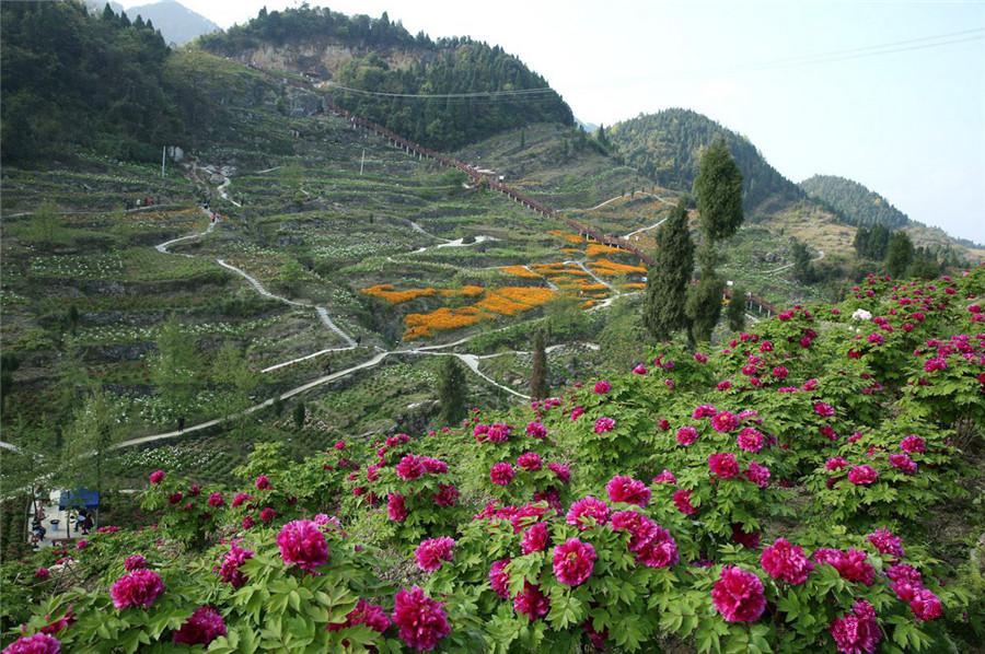 Huaxia Peony Garden in Dianjiang County, Chongqing