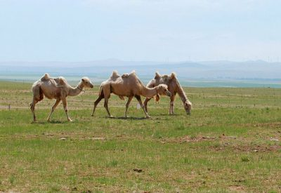 Xilamuren Grassland in Hohhot
